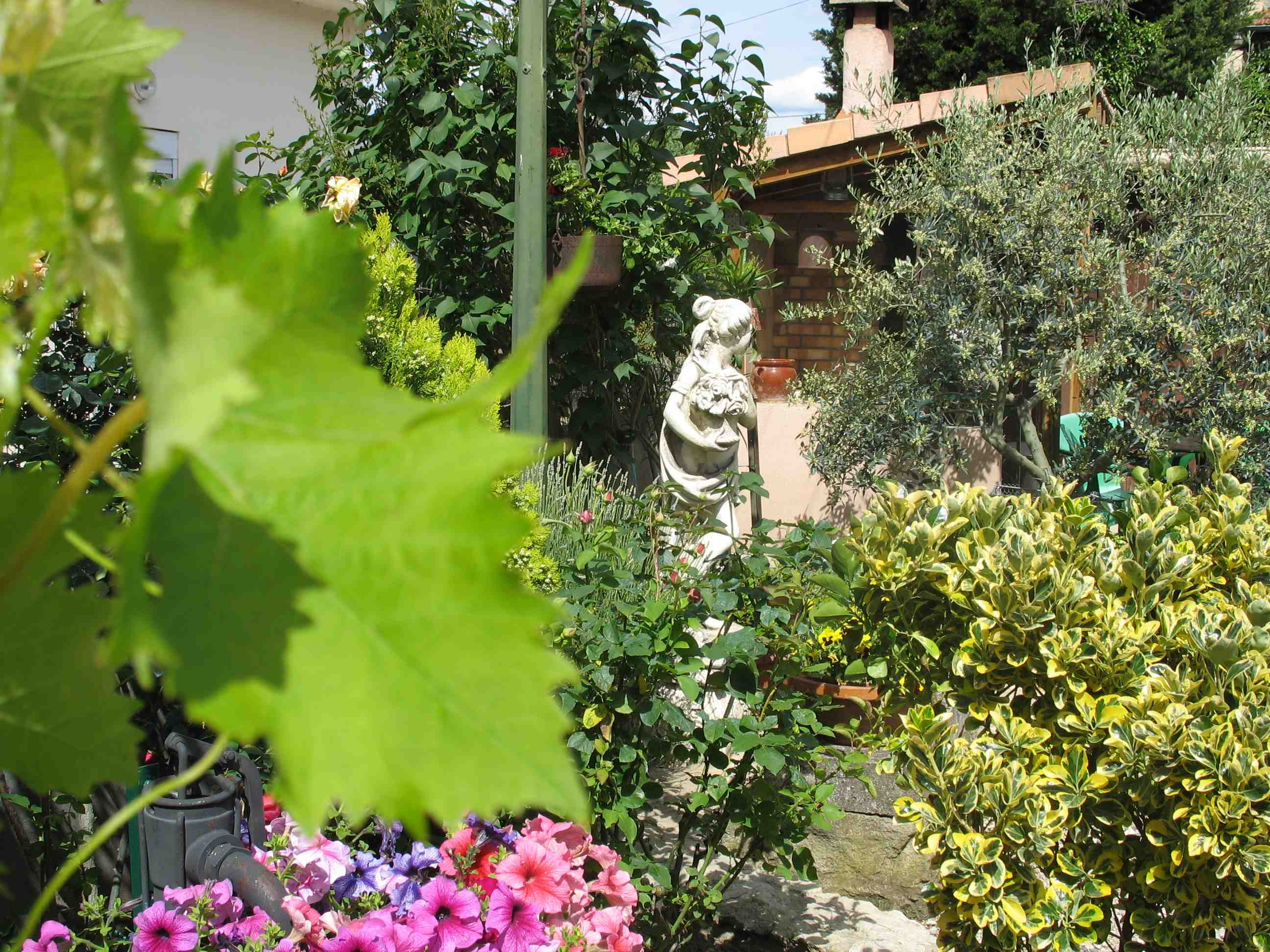 Notre tout petit jardin for Tout petit jardin